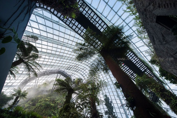 clouds forest dome