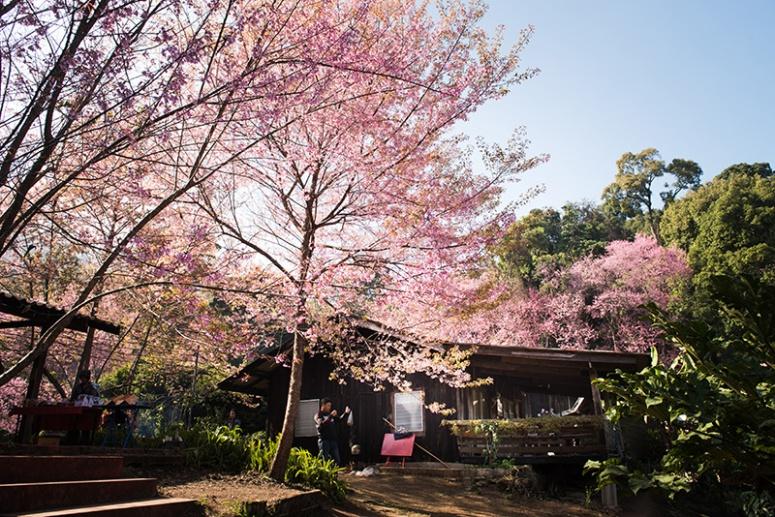 Kun Chang Kiean, Chiang Mai