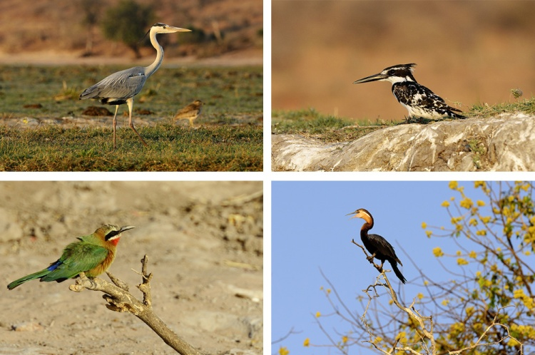 Birds at Chobe National Park, Botswana