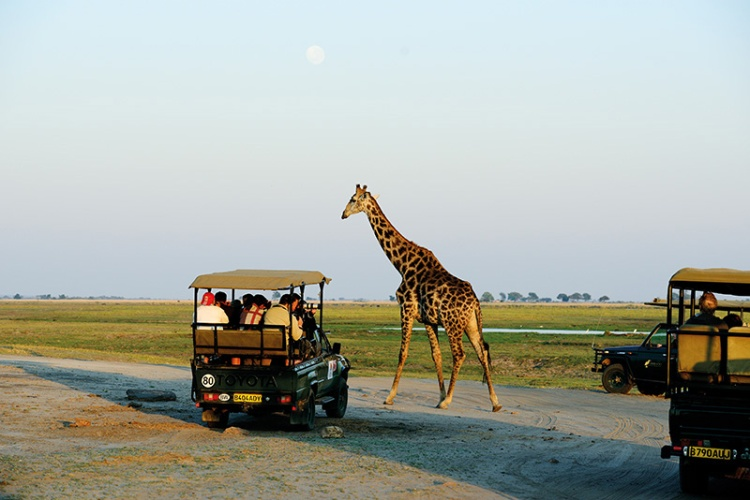 morning safari ride into Chobe National Park, Botswana