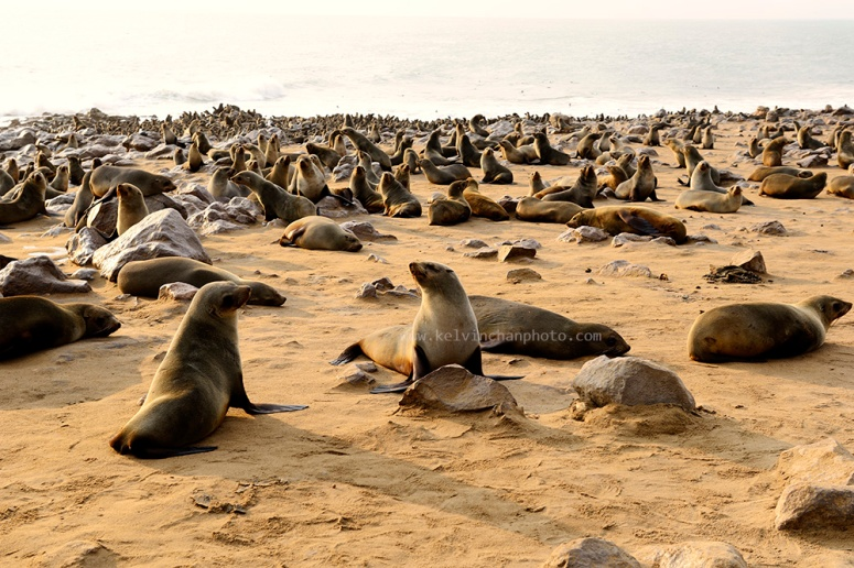 seal sanctury at Cape Cross, Namibia