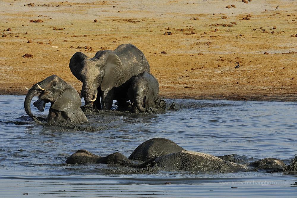 elephants bathing time at Hwange National Park