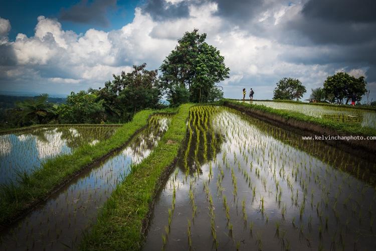 Jatiluwit Rice Terrace, Bali
